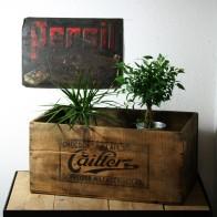 CaillerHK (6)