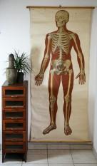 https://www.ricardo.ch/kaufen/antiquitaeten-und-kunst/antikes-mobiliar-und-einrichtung/designklassiker/40er-und-50er-jahre/schulwandbild-skelett-184-cm-x-89-cm/v/an959808134/